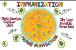 Year 7 students immunization